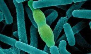 Как передается энцефалит и можно ли заразиться от человека