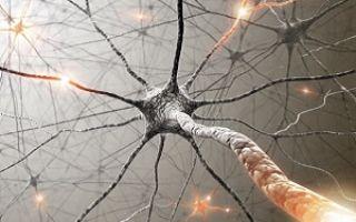 Как можно восстановить нервные клетки