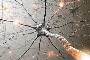 клетка нейрон