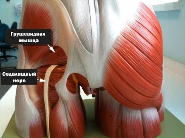 нервы и мыщцы