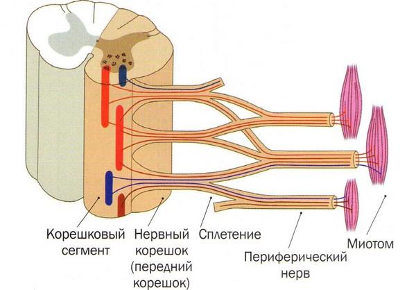 Невралгія симптоми у дорослих лікування