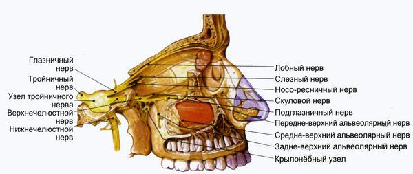 узлы тройничного нерва