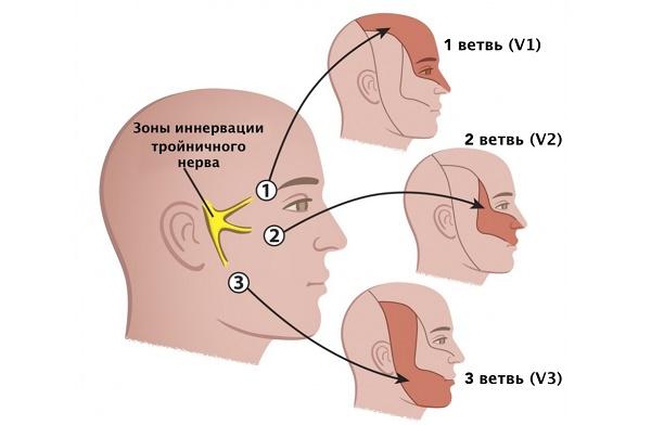 зоны нерва