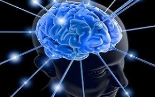 Анатомия и функции центральной нервной системы