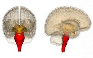 Что такое мозговая кома и ее причины