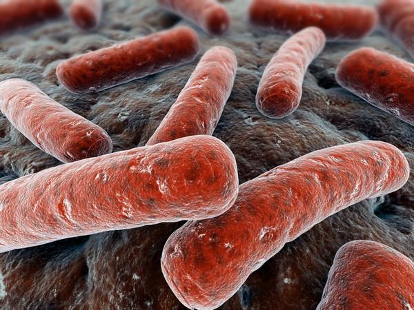 бактерии туберкулеза