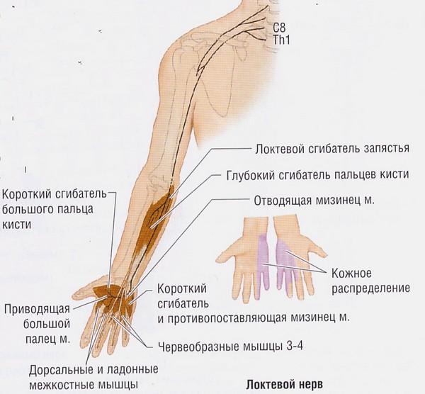 лучевой нерв