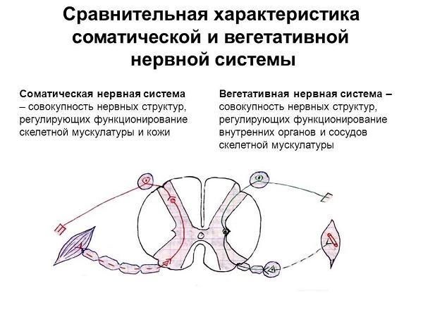 характеристики нервной системы